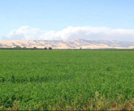 Image of land in Yolo County